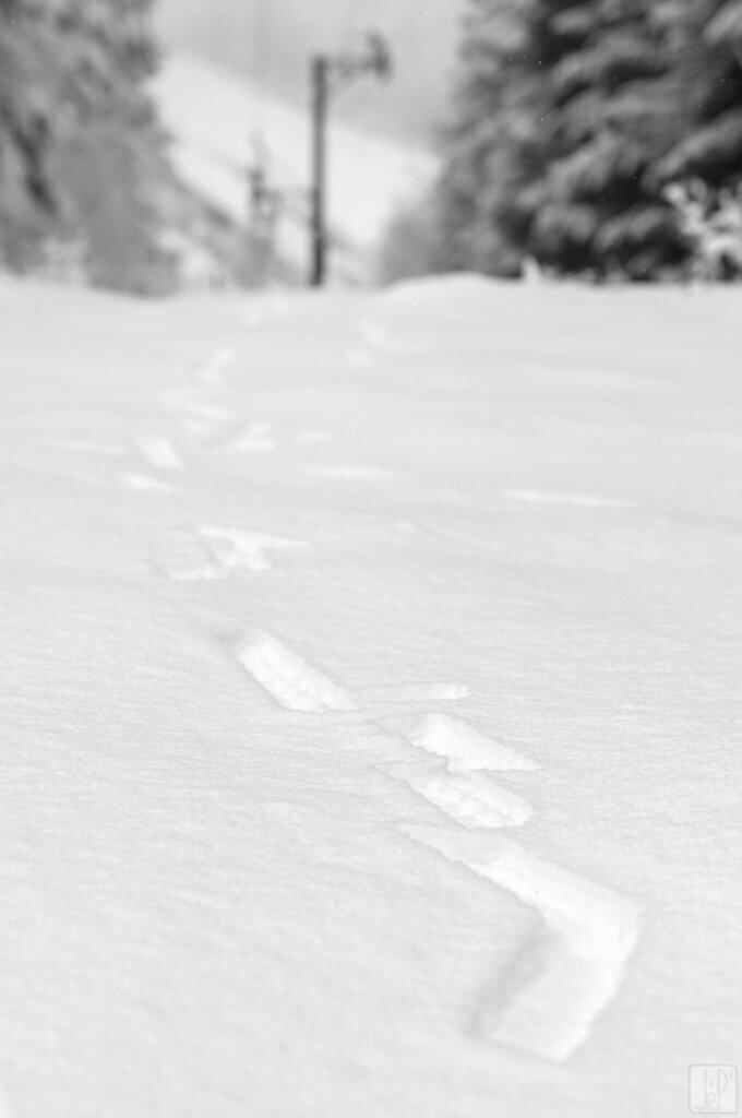 Traces de neige tombée des fils