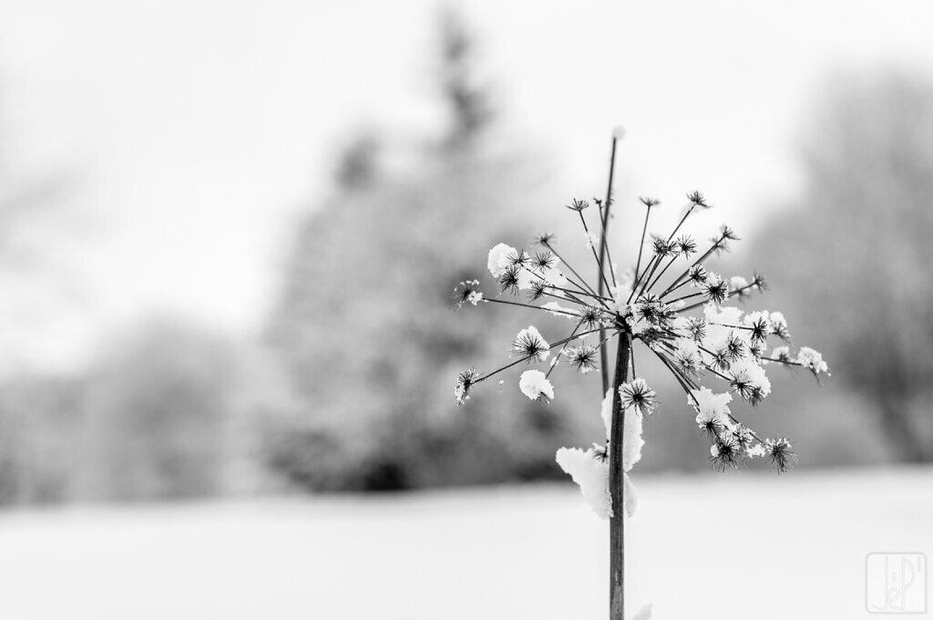 Survie sous la neige