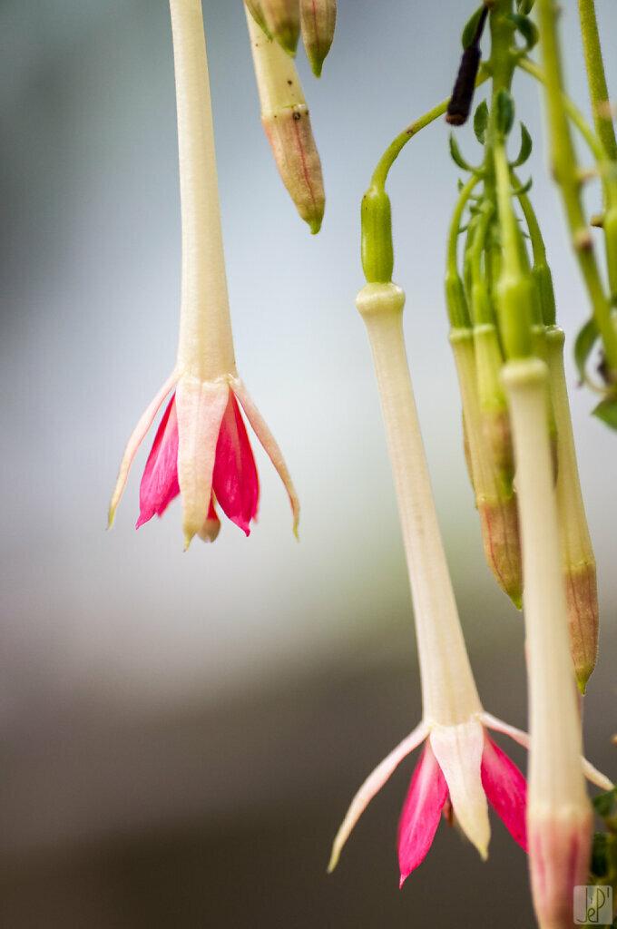 Stalact-fleurs